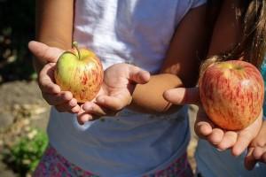 apple-1572648_640